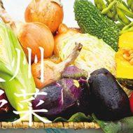 ふるさと納税 おすすめ!お礼品 季節の泉州野菜セット(大)半年セット(毎月6回発送)